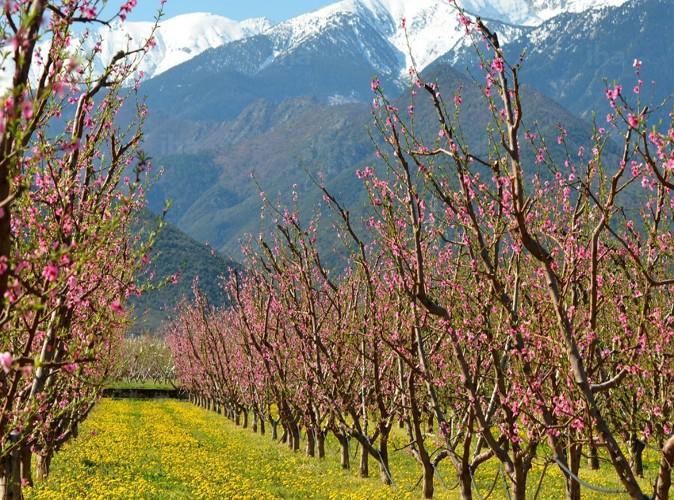 Pyr n es orientales un premier contrat de partenariat - Chambre d agriculture des pyrenees atlantiques ...